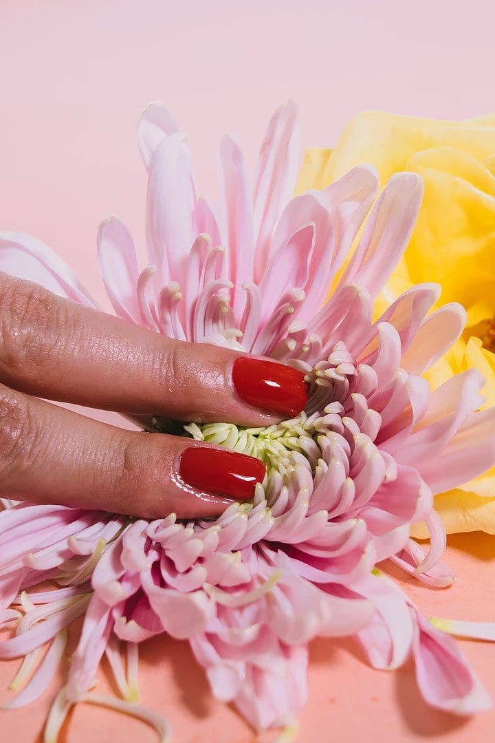 Two manicured fingers with red nails touching a pink flower