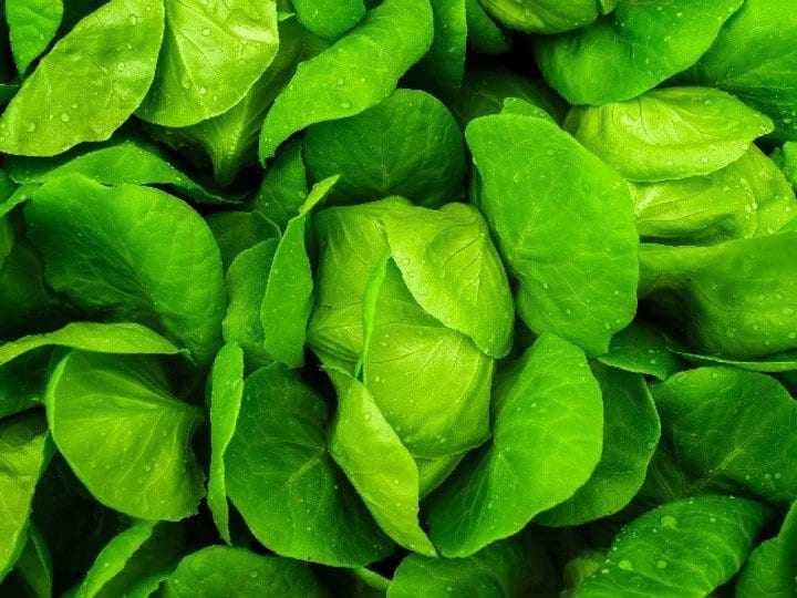 Leafy greens- Eating and Living Well in your 40s, 50s and Beyond